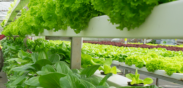 Data Science applied to Vertical Farming: the future of sustainable farming